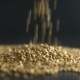 Pours Buckwheat Grain. - VideoHive Item for Sale