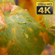 Rain Drops On Yellow Autumn Leaves - VideoHive Item for Sale