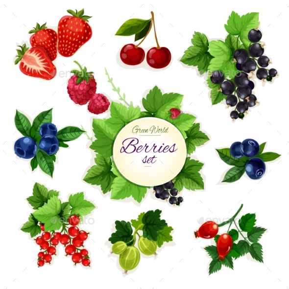 Berries. Forest And Garden Isolated Berry Icon Set - Food Objects