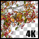 Real Malus Red Jade Tree Branch with Alpha Channel Nulled