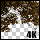 Real Maple Autumn Tree Branch with Alpha Channel Nulled