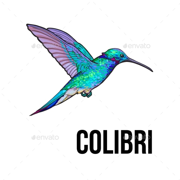 Hand Drawn Sapphire Hummingbird Colorful Sketch - Animals Characters