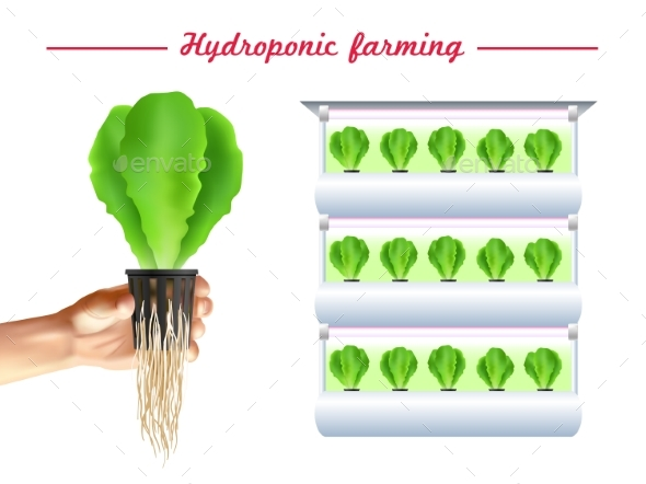 Hydroponics System Poster - Flowers & Plants Nature