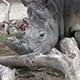 Southern White Rhinoceros (Ceratotherium Simum Simum) 02 - VideoHive Item for Sale