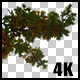Real Oak Autumn Tree Branch with Alpha Channel - VideoHive Item for Sale