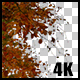 Real Beech Autumn Tree Branch with Alpha Channel - VideoHive Item for Sale