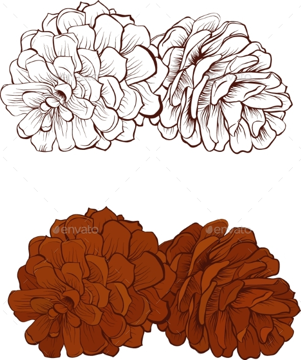 Pinecone Vector Illustration Isolated - Flowers & Plants Nature