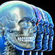 Brain Skull and Head - VideoHive Item for Sale