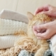Cute Ginger Cat Sleeps on a Pile of Knitted Clothes - VideoHive Item for Sale