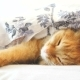 Cute Ginger Cat Lying in Bed Under a Blanket - VideoHive Item for Sale