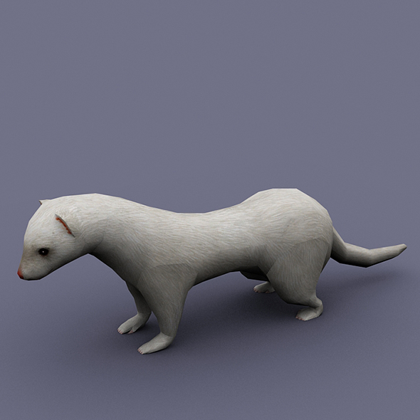 ferret_white - 3DOcean Item for Sale