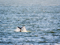 Whale Tail in Ocean - PhotoDune Item for Sale