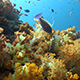 Fly Over Healthy Soft Coral Reef - VideoHive Item for Sale