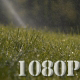 Green Grass Sprinkler Dew - VideoHive Item for Sale