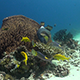 Reef Fish Feeding Around a Big Barrel Sponge Beautiful Reef Scenery - VideoHive Item for Sale