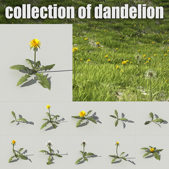Dandelion Collection R-Assets - 3DOcean Item for Sale