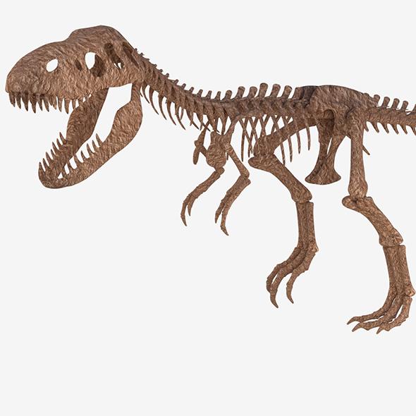 Tyrannosaurus Rex Skeleton - 3DOcean Item for Sale