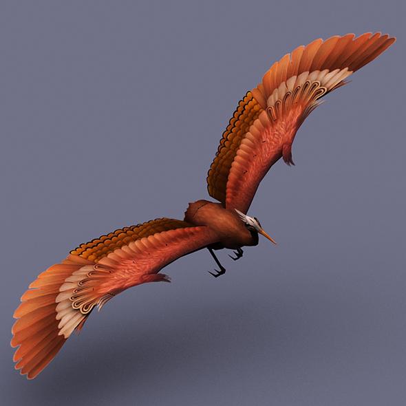 stork brown - 3DOcean Item for Sale