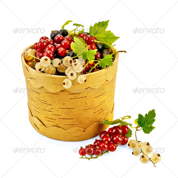 Currants in Berestov tueske - Stock Photo - Images
