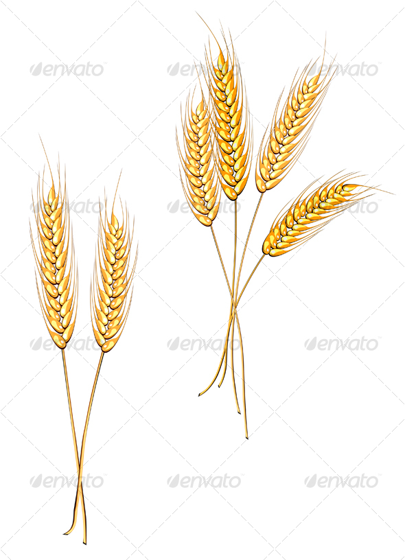 Ripe wheat isolated on white - Nature Conceptual