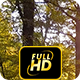 Forrest With Sun Beams - VideoHive Item for Sale
