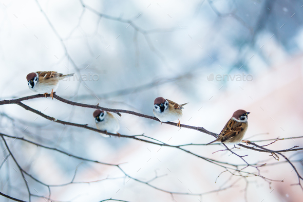 bird feeders. tree house for the birds.  Bird feeder in winter p - Stock Photo - Images