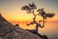 Tree - PhotoDune Item for Sale