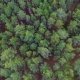 Aerial View of Green Forest. - VideoHive Item for Sale