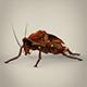 Fantasy Cockroach