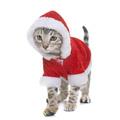 dressed bengal kitten - PhotoDune Item for Sale