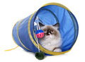 english longhair cat in tunnel - PhotoDune Item for Sale
