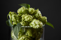 hops in a beer glass - PhotoDune Item for Sale