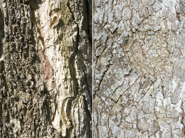 Tree bark - Wood Textures