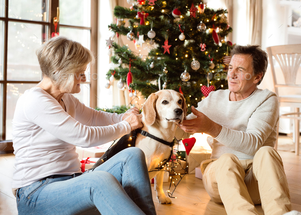 Senior couple with dog in front of Christmas tree - Stock Photo - Images