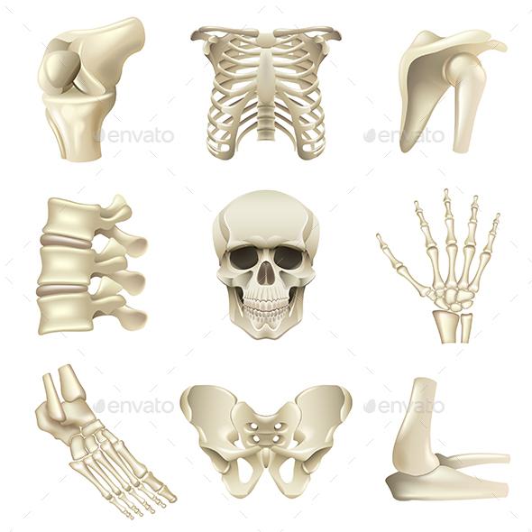 Human Bones Icons Vector Set - Health/Medicine Conceptual