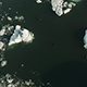 Seals Swimming Between Icebergs - VideoHive Item for Sale