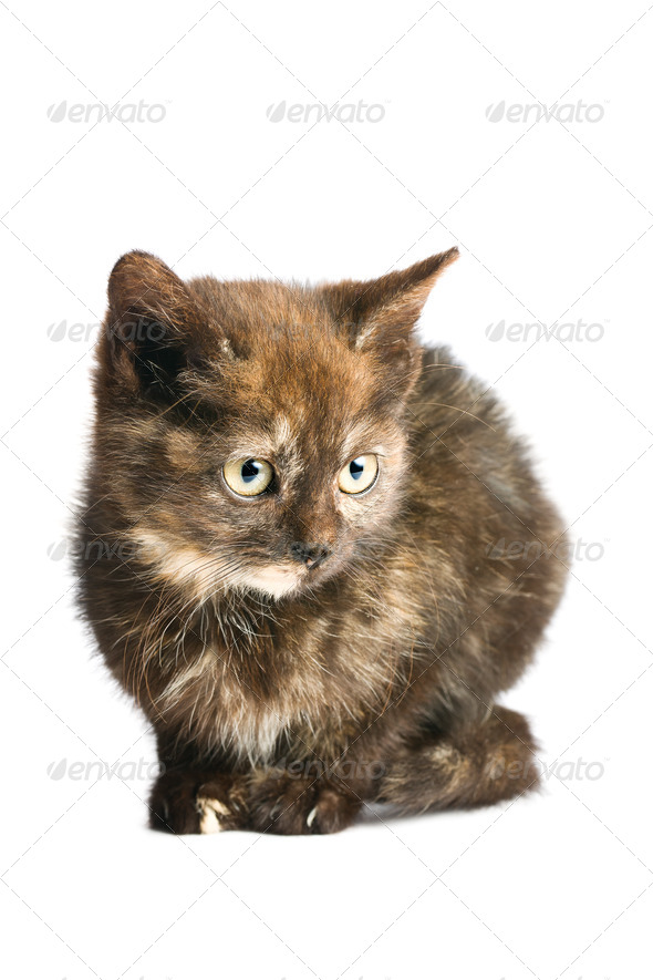 little kitten - Stock Photo - Images