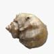 Seashell - 3DOcean Item for Sale