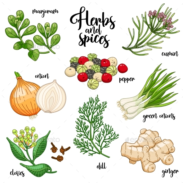 Spices and Herbs Vector Set - Flowers & Plants Nature