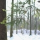Snowy Forest, Christmas Tree - VideoHive Item for Sale