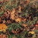 Autumn Leaves Are Falling All Around To the Green Grass, Wind Weather. - VideoHive Item for Sale