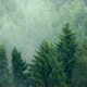 Mist Rising From Wilderness Forest - VideoHive Item for Sale