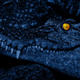 Baby Crocodile With Eyes Glowing - VideoHive Item for Sale