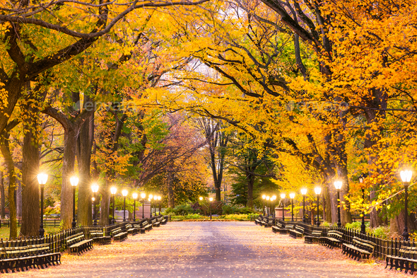 Central Park in New York City - Stock Photo - Images