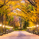 Central Park in New York City - PhotoDune Item for Sale