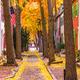 Fall in Philadelphia - PhotoDune Item for Sale