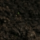Growing Green Cucumber Plants Agriculture Spring - VideoHive Item for Sale