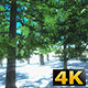 Winter Sunny Forest - VideoHive Item for Sale
