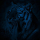 Tiger Yawning At Night - VideoHive Item for Sale