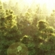 Green Forest at Sunset - VideoHive Item for Sale